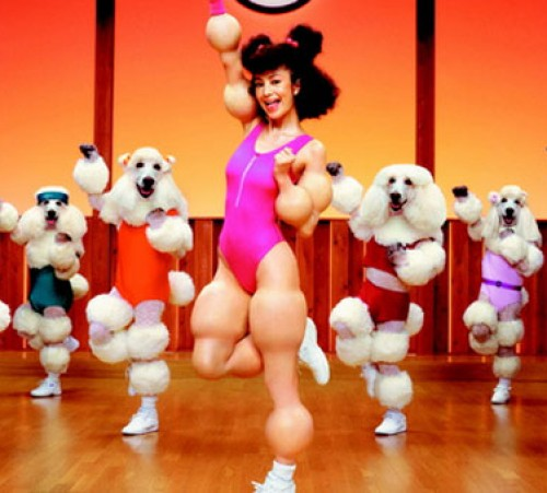 Poodle-workout