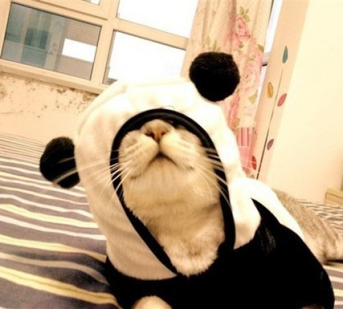 cat-in-a-panda-costume