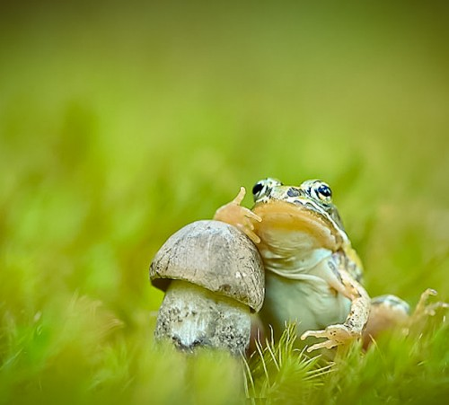 mushroom-photography-vyacheslav-mishchenko-37c
