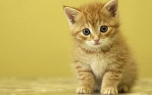 Cute-Kitten-kittens-16096566-1280-800