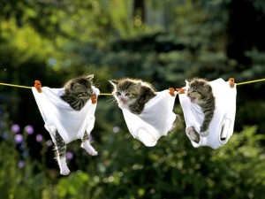 kittens-in-underpants-big
