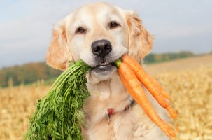 dog-eating-carrots