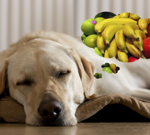 Dog-thinking-about-apples-and-bananas