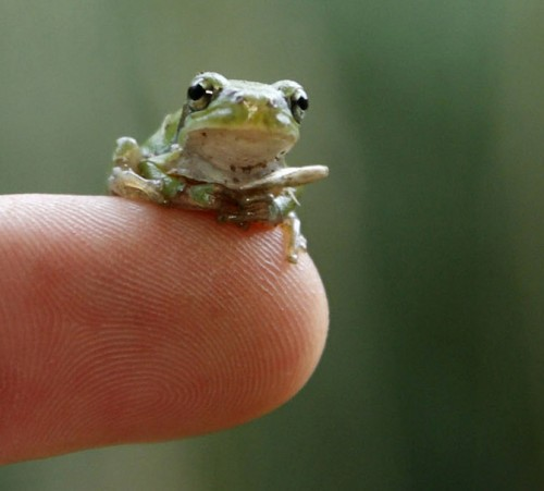 world-animal-day-european-tree-frog