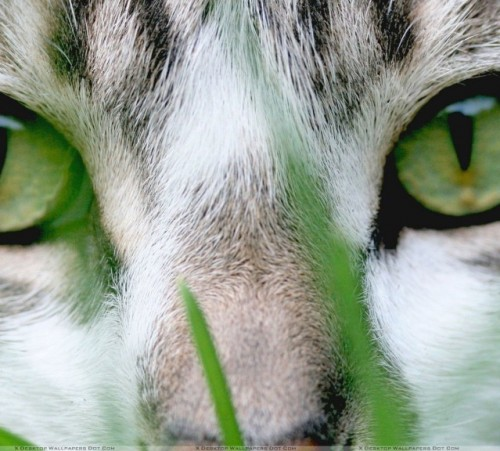 black-cat-with-green-eyes-wallpaper-5-1024x576