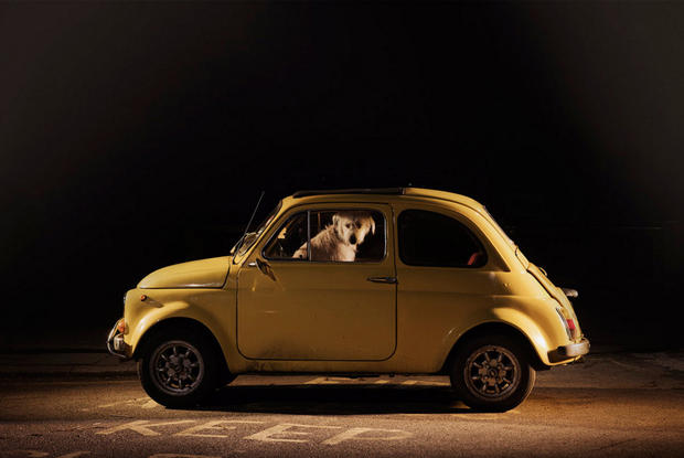 dogs-in-cars-milo-by-martin-usborne