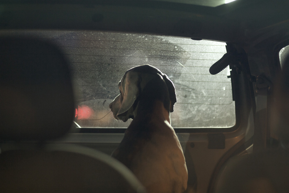 dogs-in-cars-by-martin-usborne-o-1
