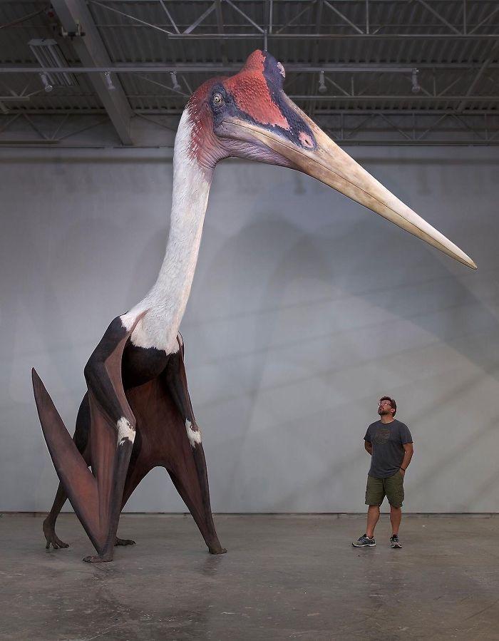 Quetzalcoatlus Northropi - stærsti fugl til að fljúga á jörðinni. Maðurinn við hlið hans er 180 cm á hæð